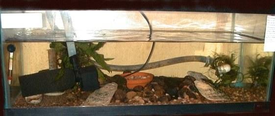 Sewellia spawning tank
