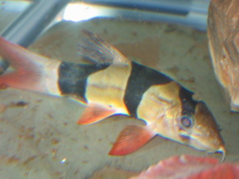 chefkeith-advanced stage skinny clown — Loaches Online