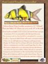 Clown Loach Poster - English