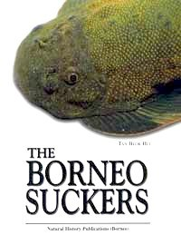 Borneo Suckers