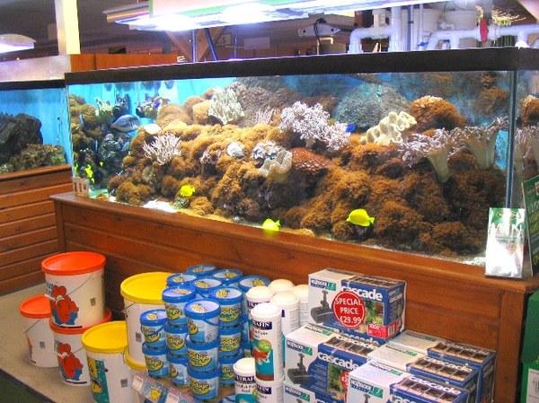 Maidenhead Aquatics - Reef Tank