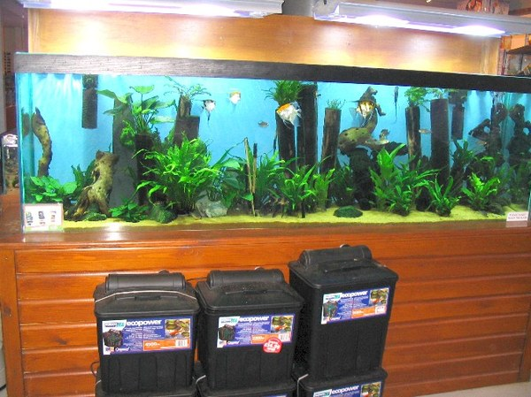 Maidenhead Aquatics - 8 foot display tank