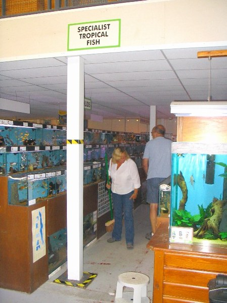 Maidenhead Aquatics - Specialist Fish Section