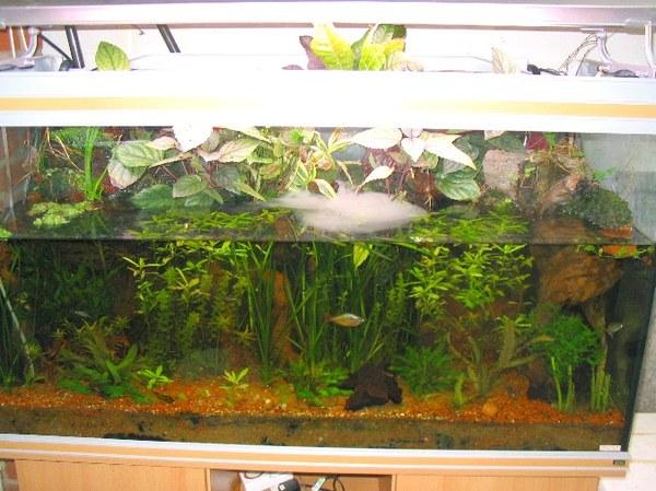 Photo Scanner: Loach Catfish