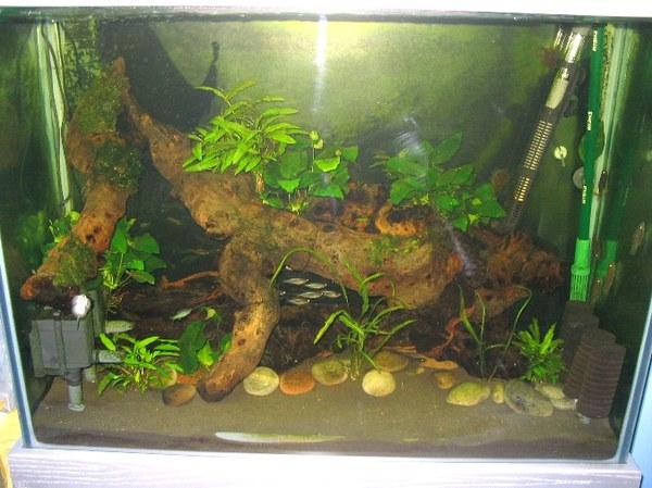 Maidenhead Aquatics - Emma & Steve's River-Tank