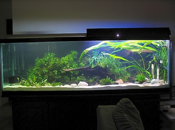 Aquarium in the evening of the set-up day.