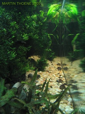 View looking down tank length from left end.
