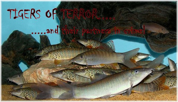 Tigers of Terror main header pic