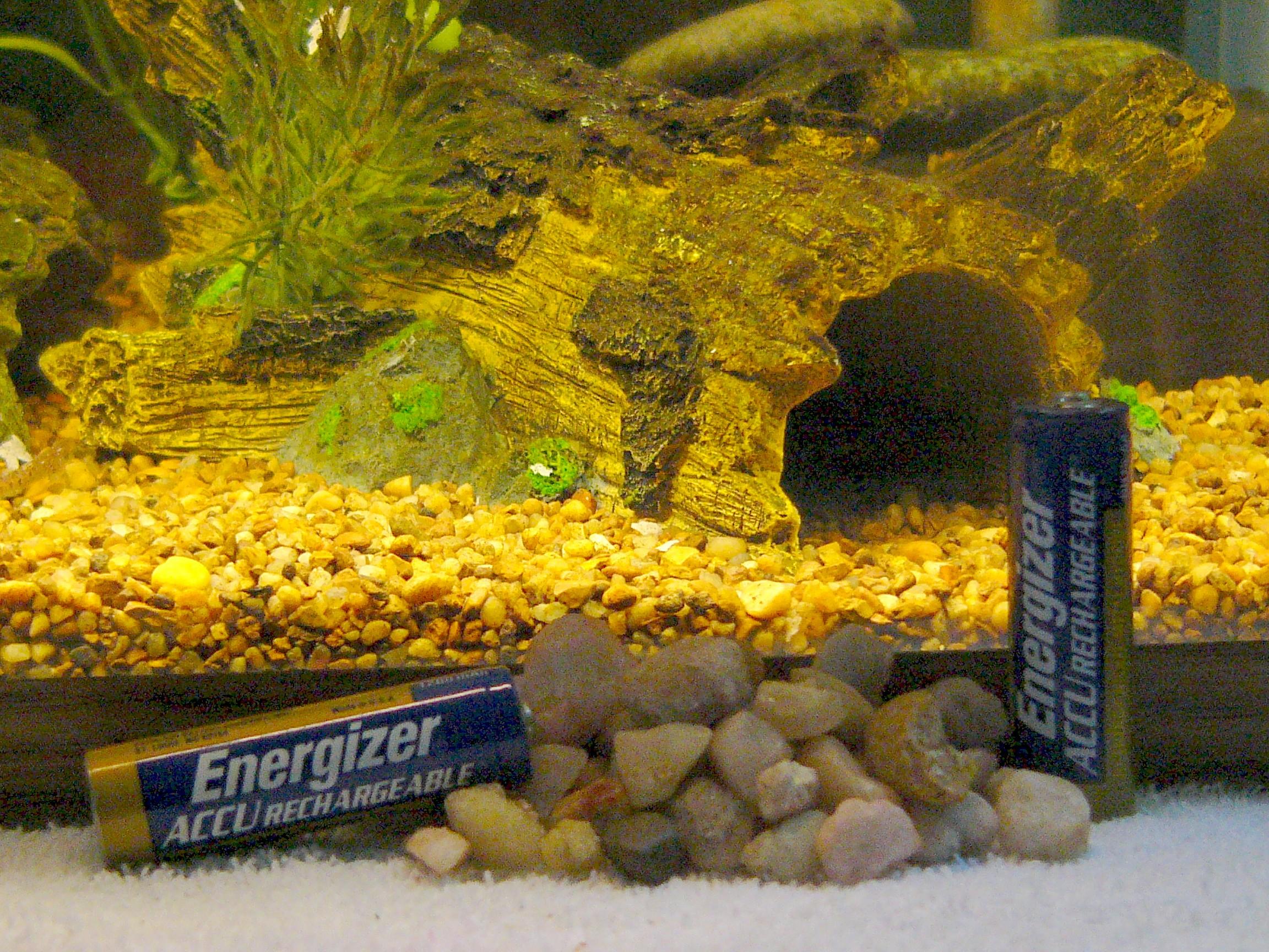 Acanthocobitis botia - Change of substrate