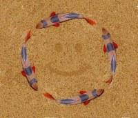 Chromobotia macracanthus, Smilie Circle