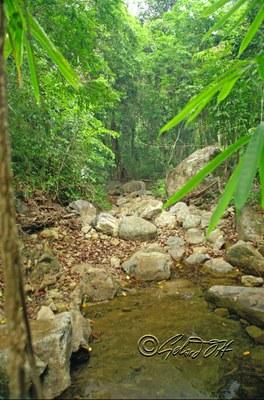 Schistura kohchangensis - natural habitat, Koh Chang