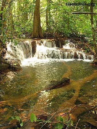 Schistura mahnerti habitat, Thailand