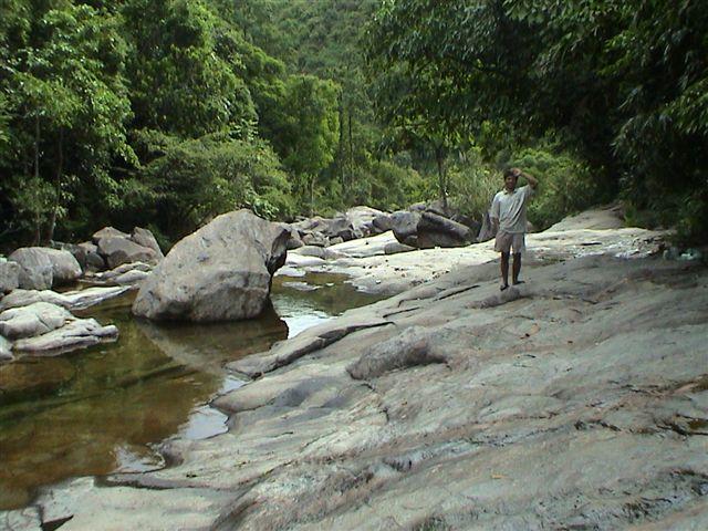Sewellia lineolata, natural stream.