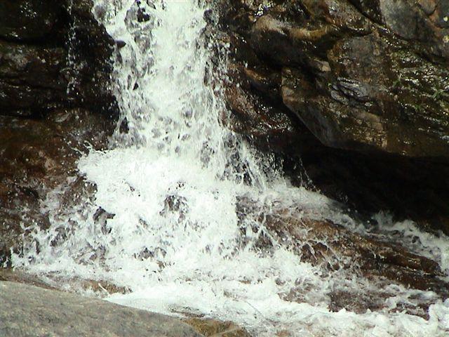 Sewellia lineolata, natural stream at base of waterfall.